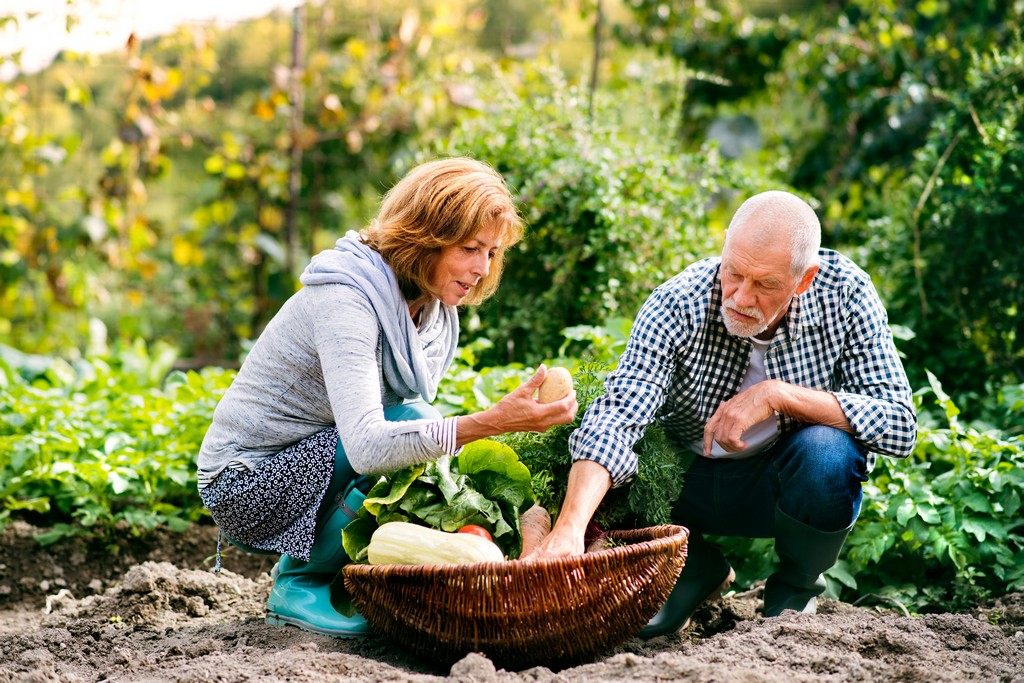 Benefits of Hobbies for Seniors
